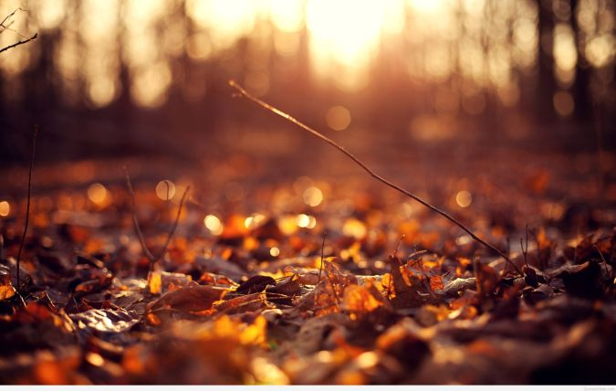 autumn-leaves-background-hd